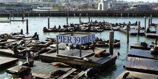 支付寶登陸美國舊金山勝地漁人碼頭:國外旅游也不愁
