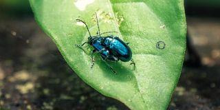 """生态的世界末日:昆虫可能将在""""一个世纪内""""灭绝"""