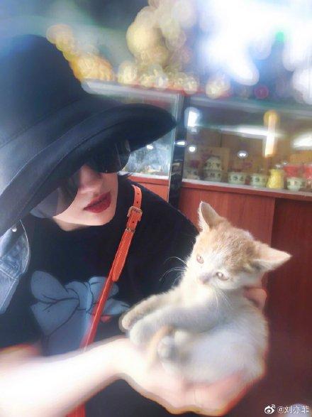 刘亦菲手捧小橘猫